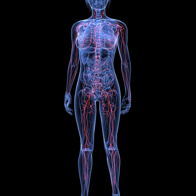 The Lymphatic System's Role in Healing